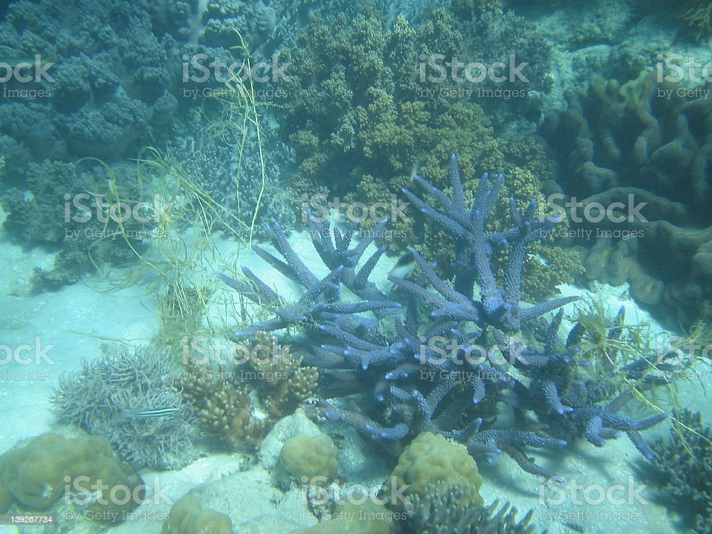 Great Barrier Reef 7 royalty-free stock photo