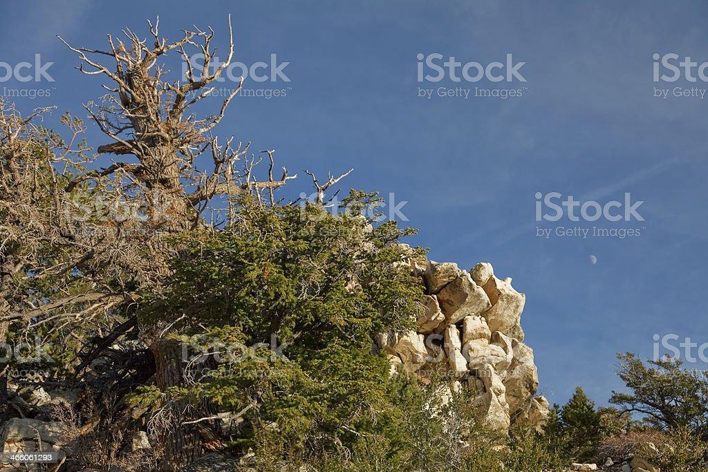 Great Basin National Park, Nevada - November 2011 royalty-free stock photo