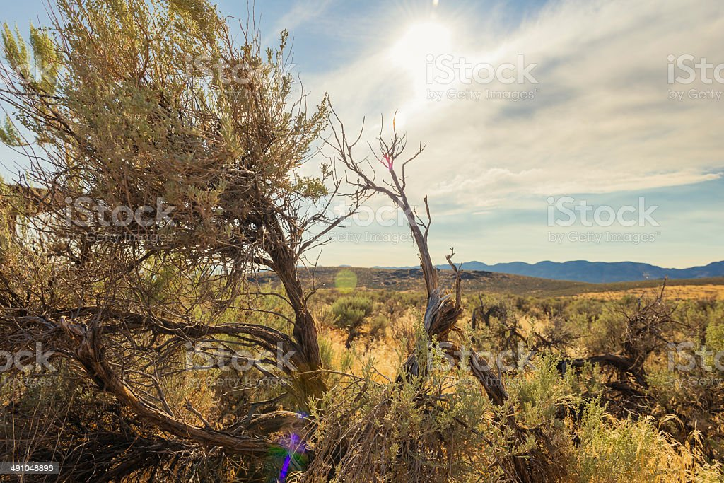 Great Basin National Park Nevada USA Mountain Landscape stock photo