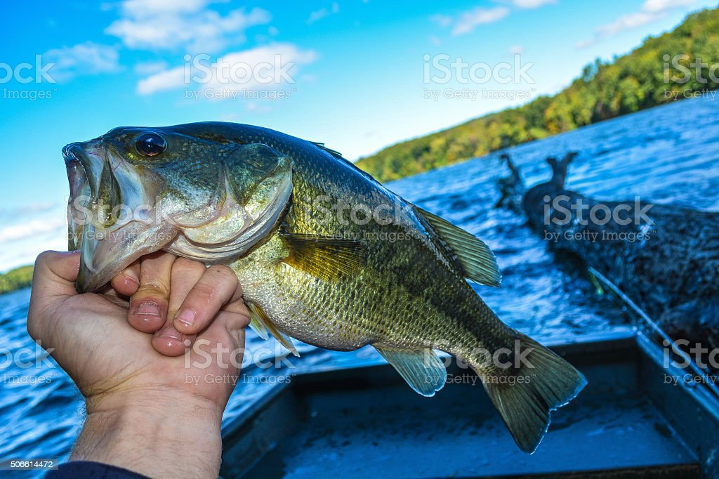 great catch stock photo