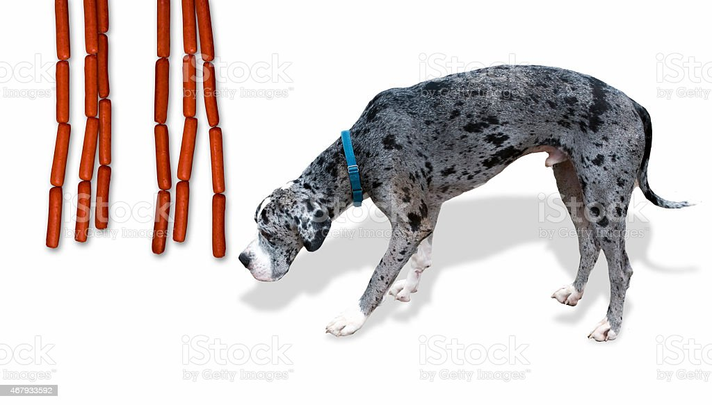 Great Dane and dogs. stock photo