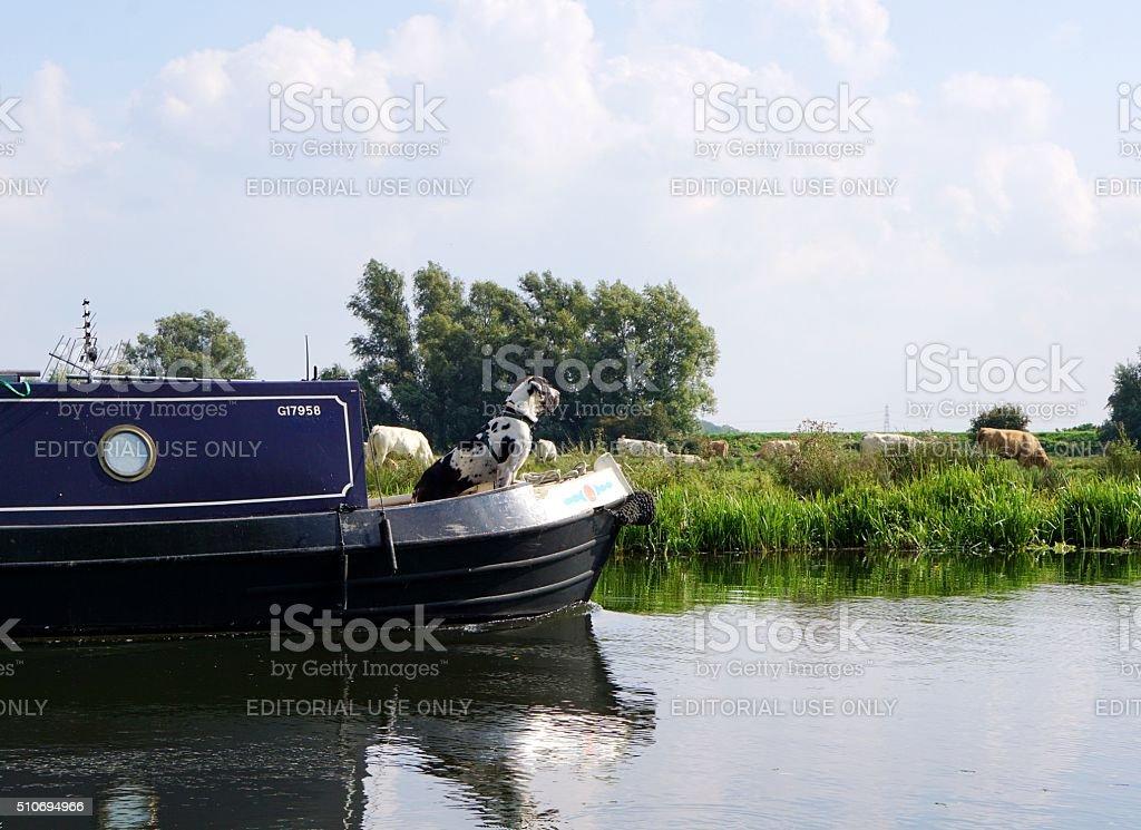 Great Dane Dog, Boating stock photo
