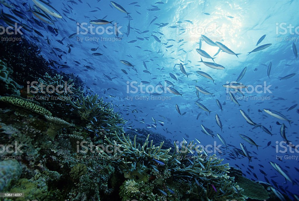Great Day On The Reef stock photo