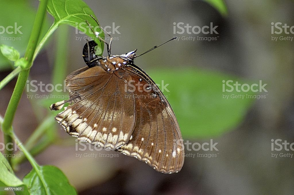 Great Egg fly stock photo