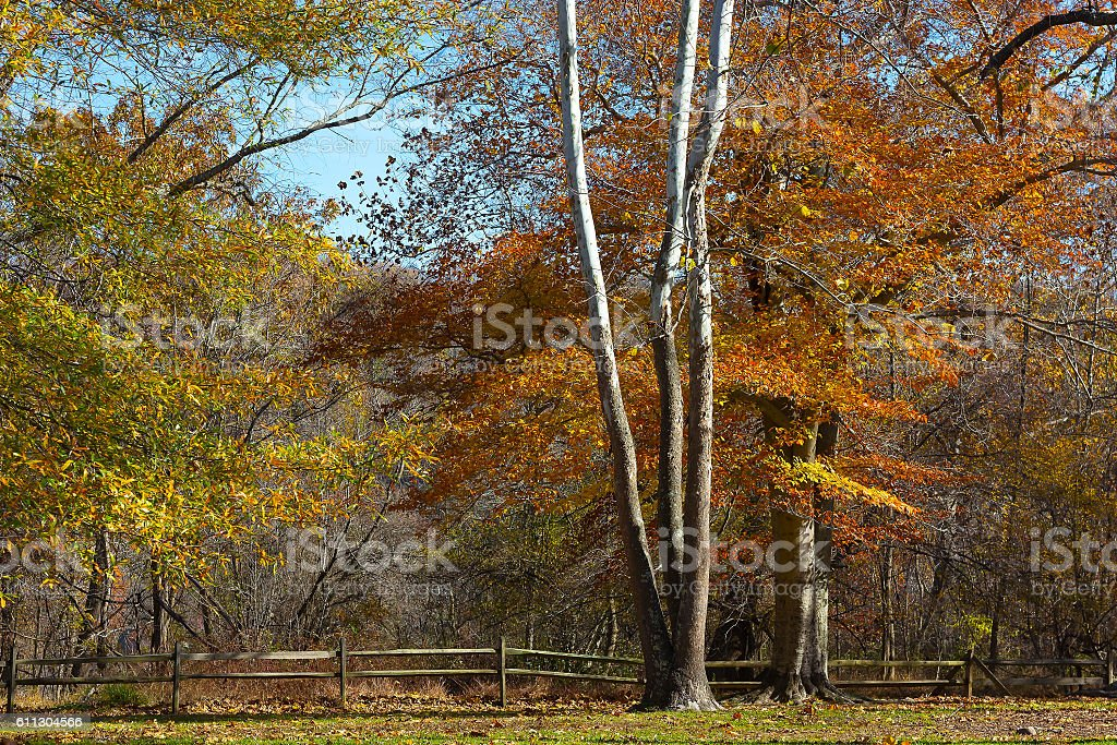 Great Falls state park in autumn in Virginia, USA. stock photo