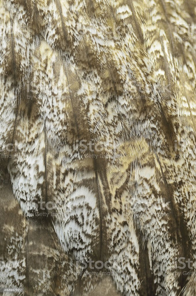 Great Grey Owl feathers royalty-free stock photo