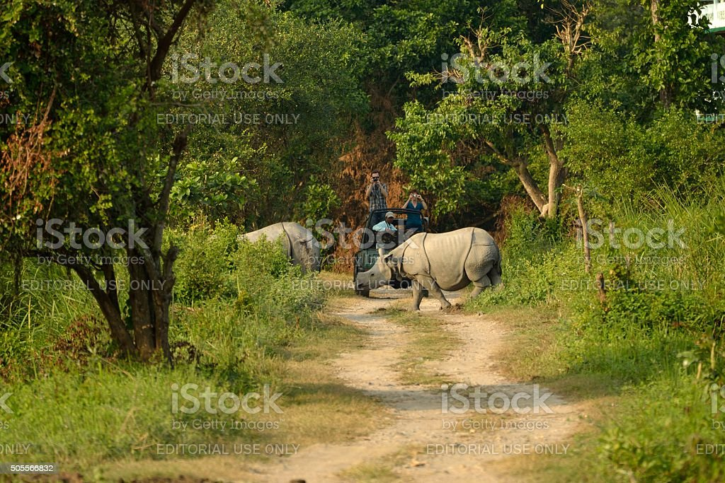 Great Indian Rhino stock photo