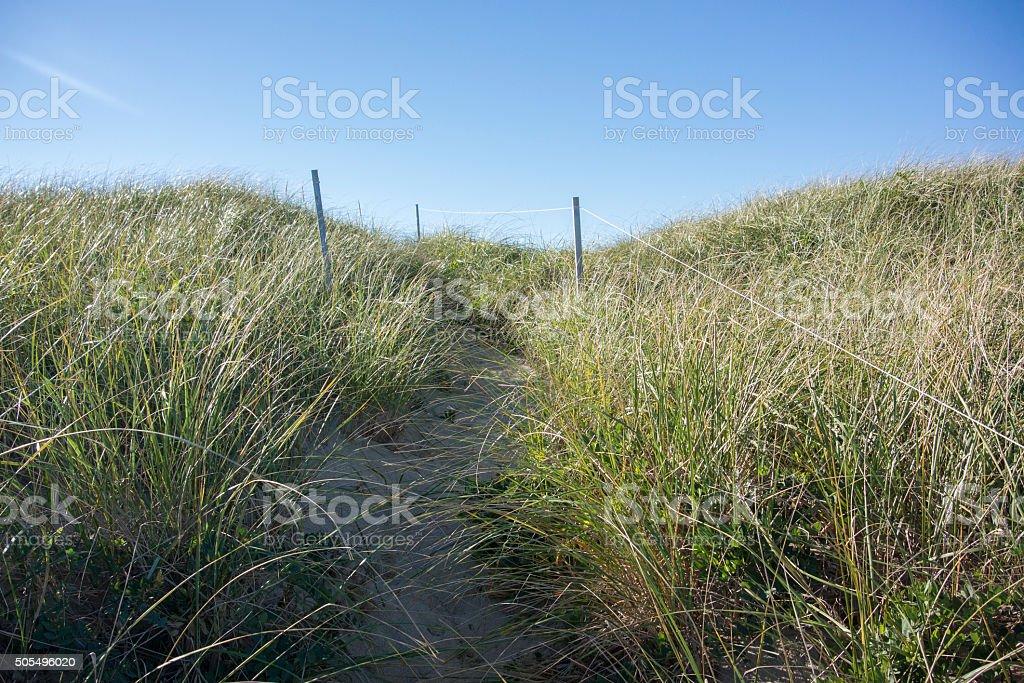 Great Island Grassy Sand Dune Path stock photo