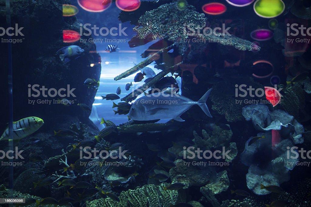 great marine Aquarius to Dubai royalty-free stock photo
