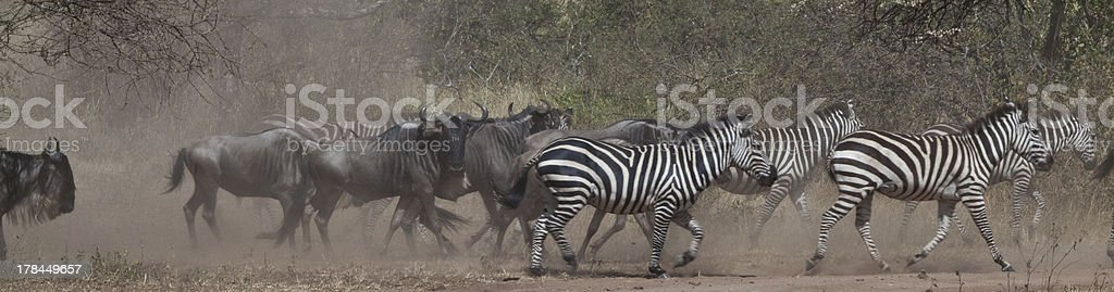 Great Migration stock photo
