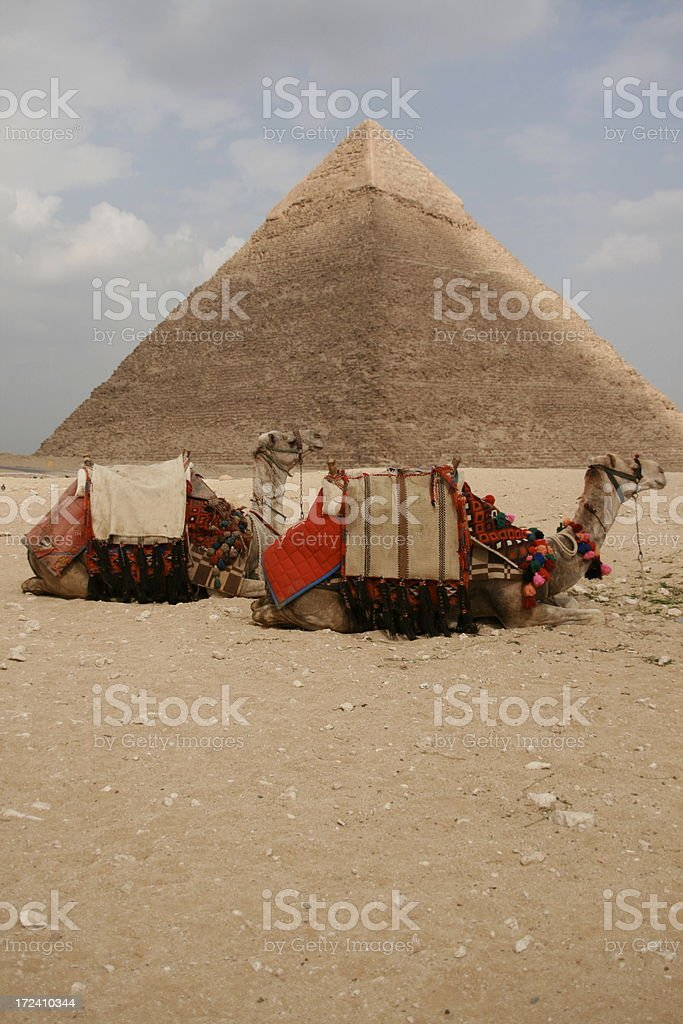 Great Pyramid of Giza and camels under cloudy sky stock photo