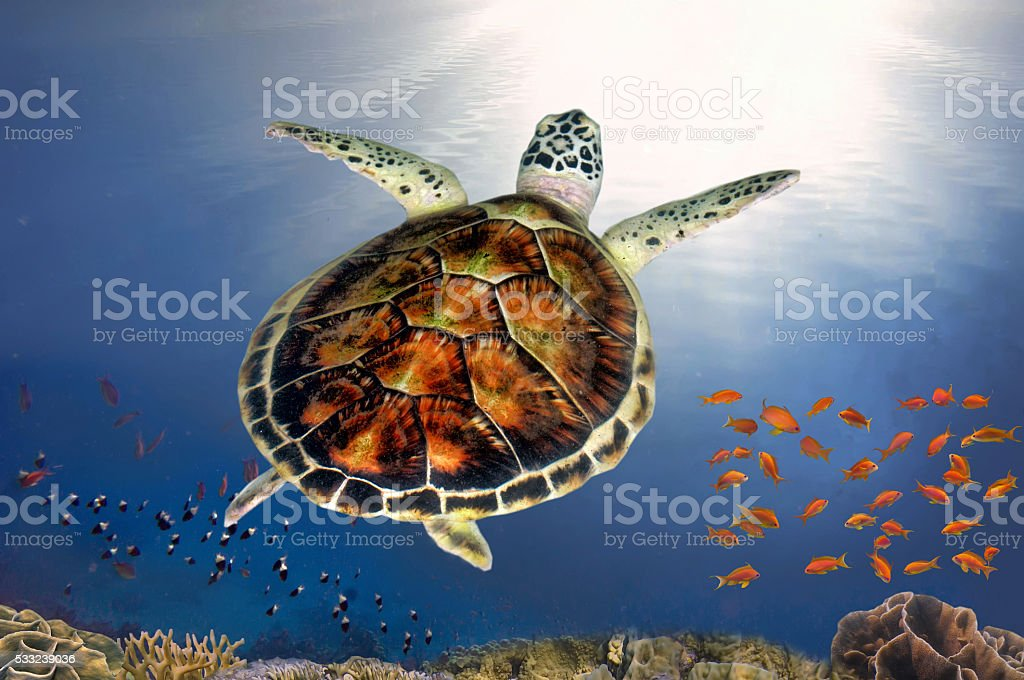Great sea turtle smiling stock photo