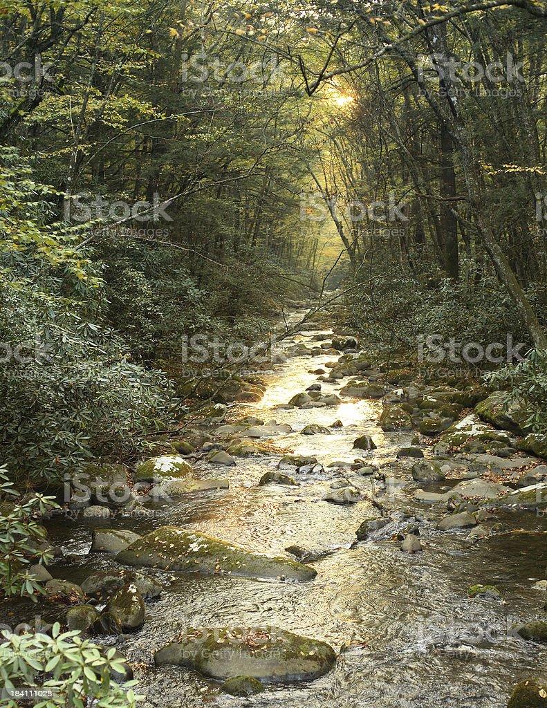 Great Smokey Mountains Creek stock photo
