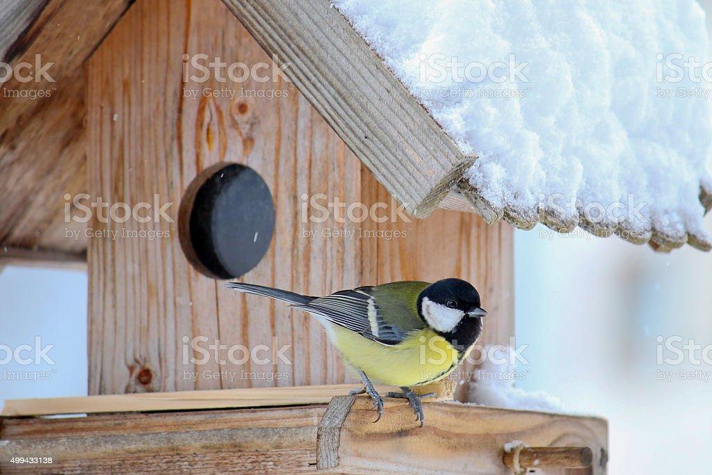 Great tit bird on the wooden bird feeder with snow stock photo