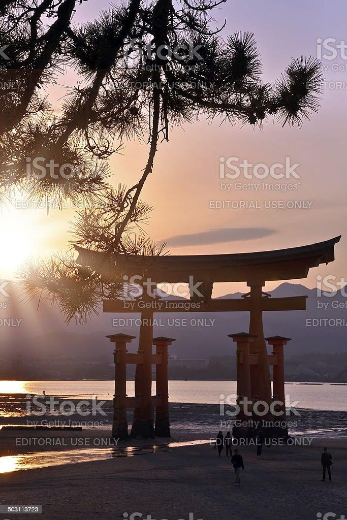 Great tori of Miyajima in the sunset - Japan stock photo