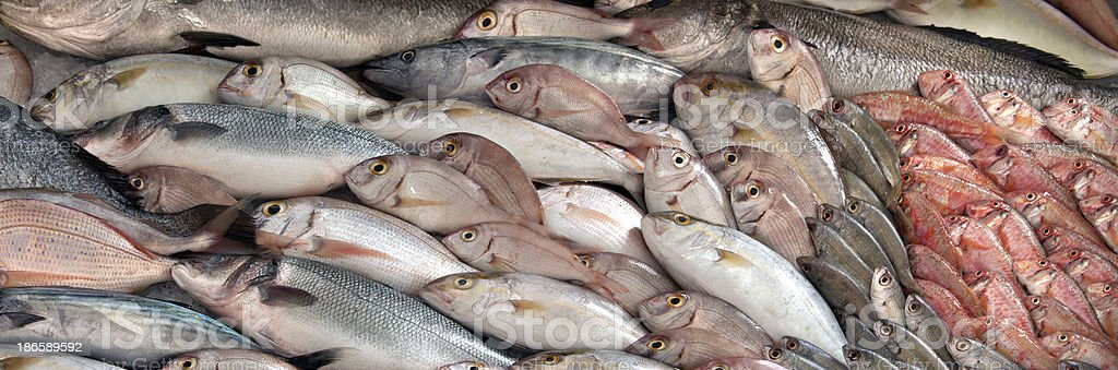 Great variety of fish royalty-free stock photo