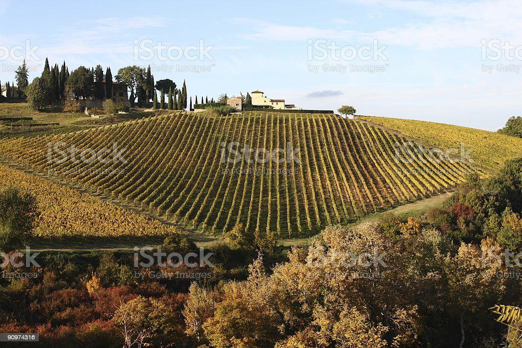 Great Vineyard at Fall Chianti royalty-free stock photo