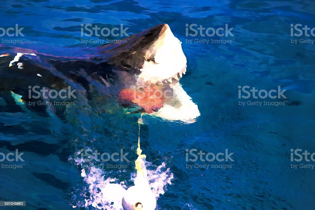 Great White having a snack stock photo