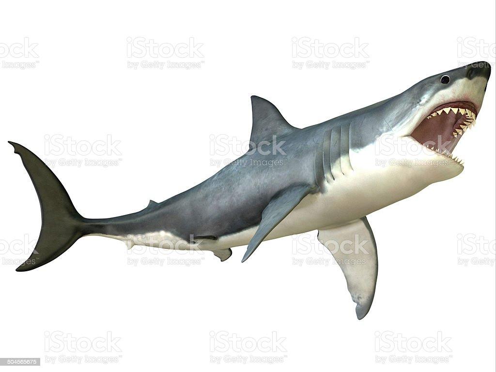Great White Shark Attack stock photo