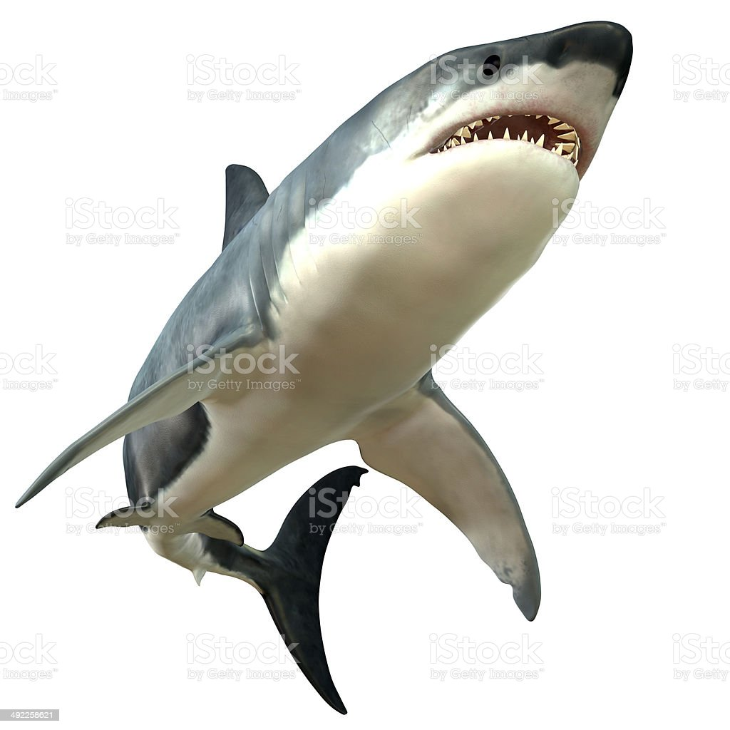Great White Shark Body stock photo