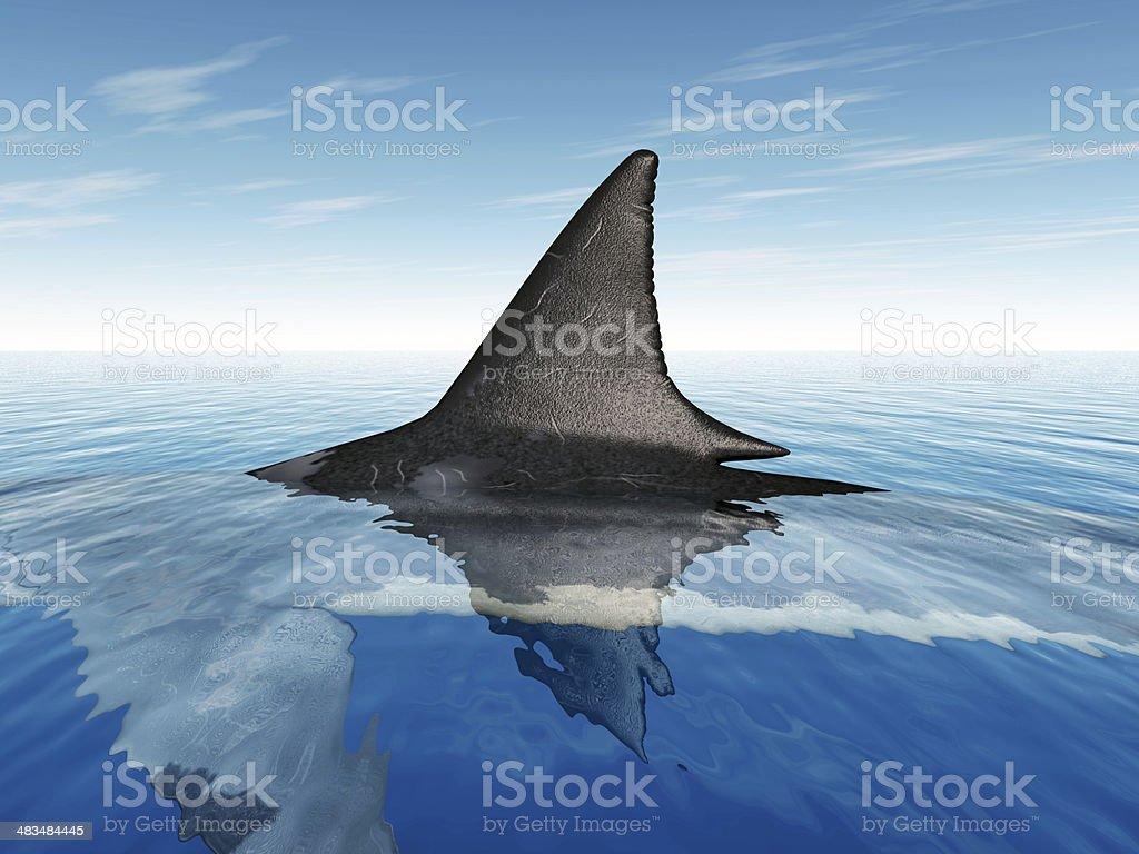 Great White Shark Fin stock photo