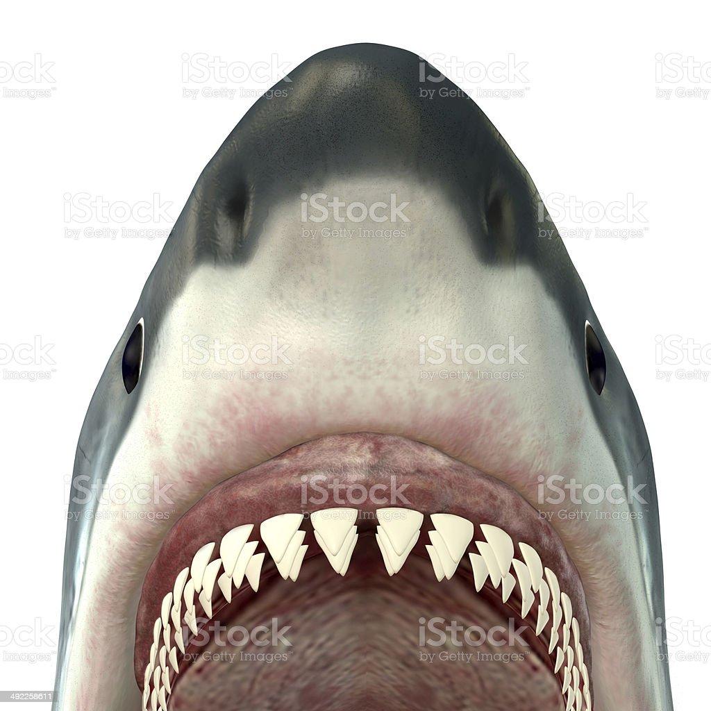 Great White Shark Jaws stock photo