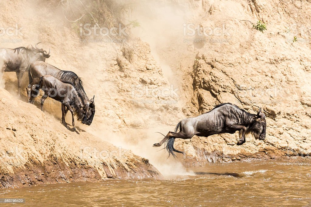 Great Wildebeest Migration in Kenya stock photo
