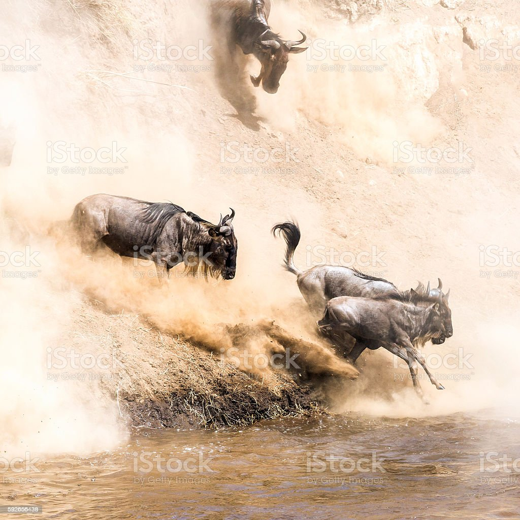 Great Wildebeest Migration in Kenya stock photo