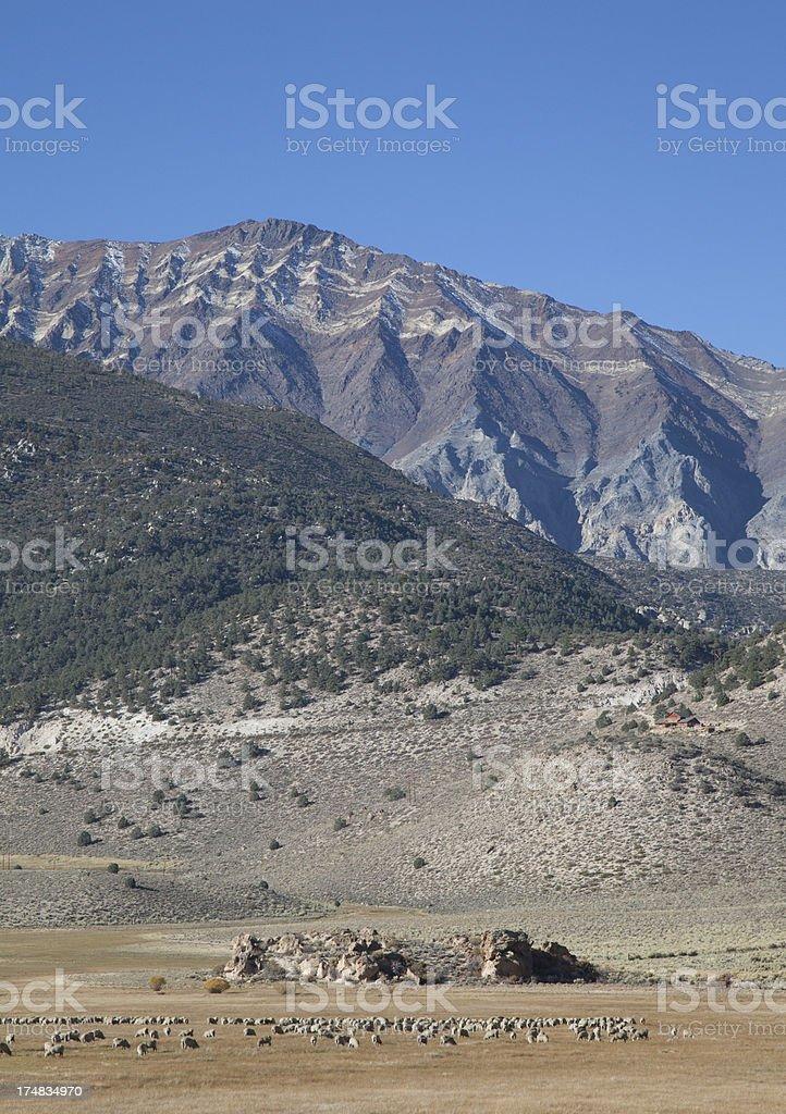 Greatest Pasture royalty-free stock photo
