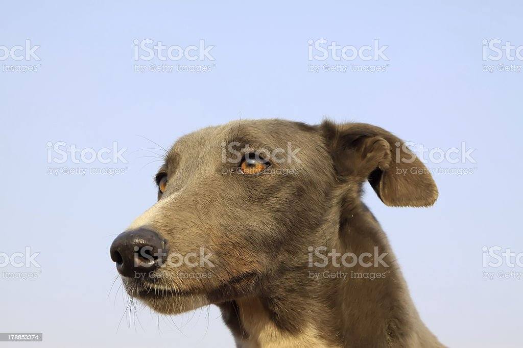 gree dogs royalty-free stock photo