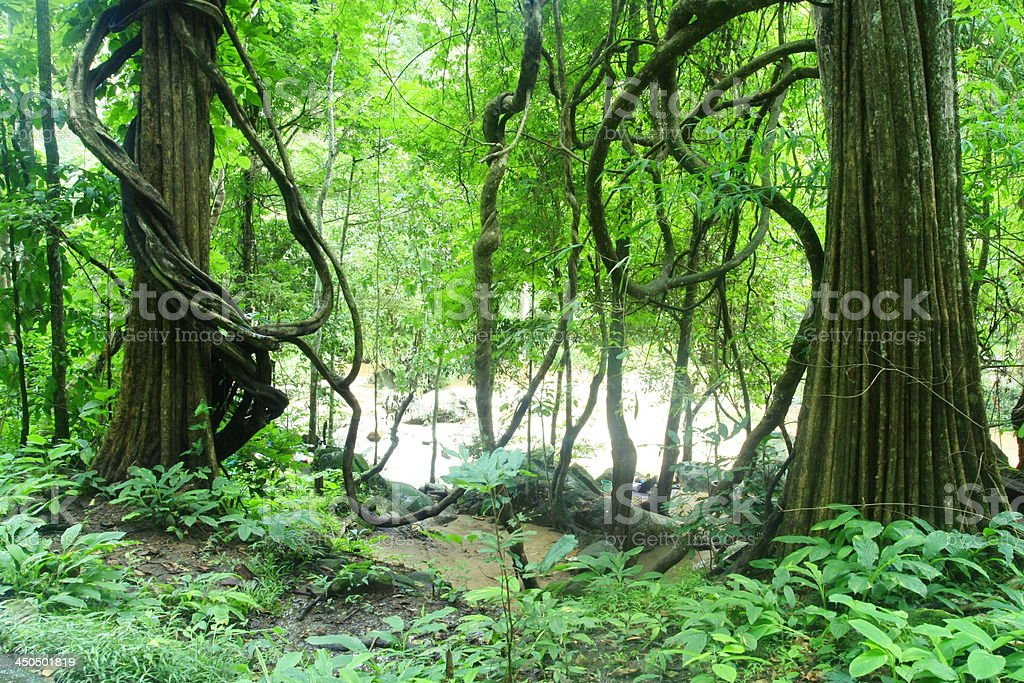 gree forest royalty-free stock photo