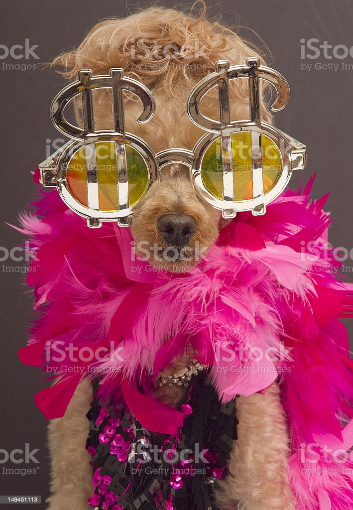 Greedy and Glamourous stock photo