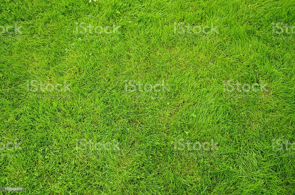 Greeen Grass royalty-free stock photo