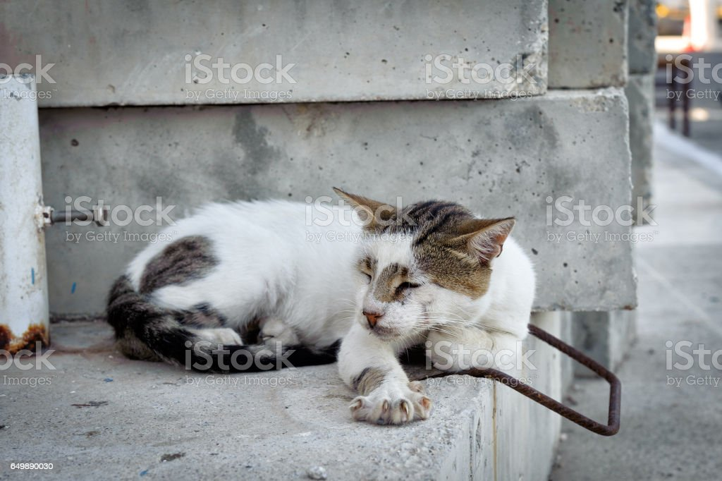 Greek cat is slipping on a wall at Paleochora town stock photo