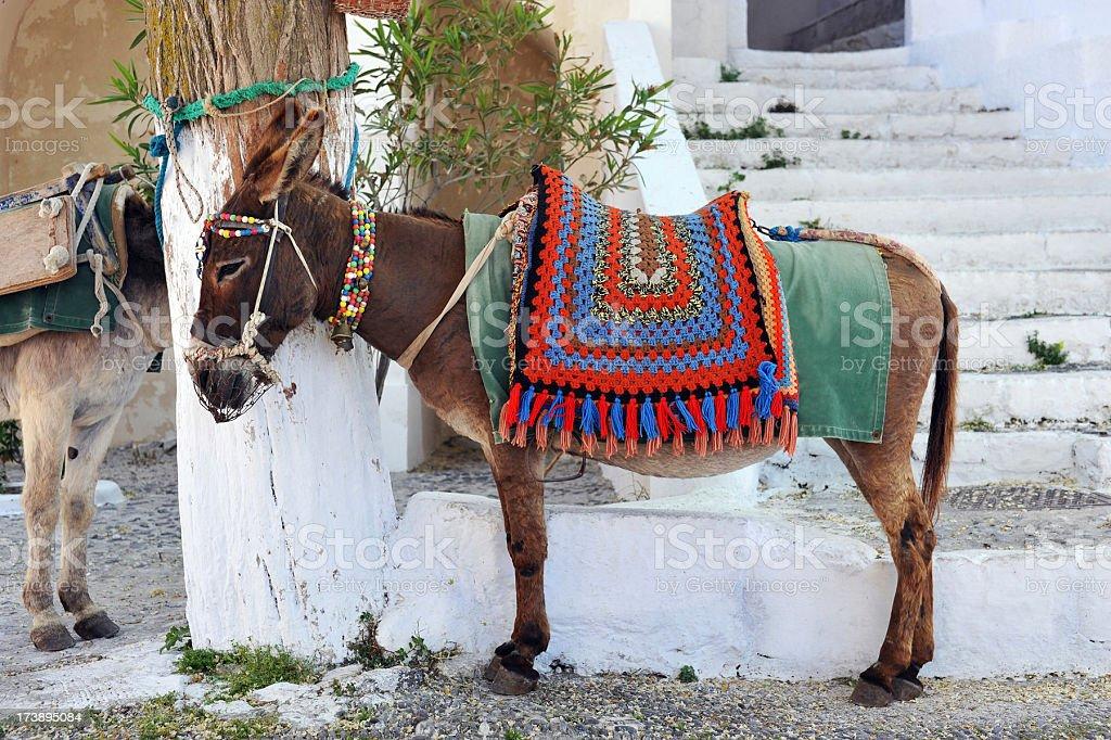 Greek Donkey royalty-free stock photo