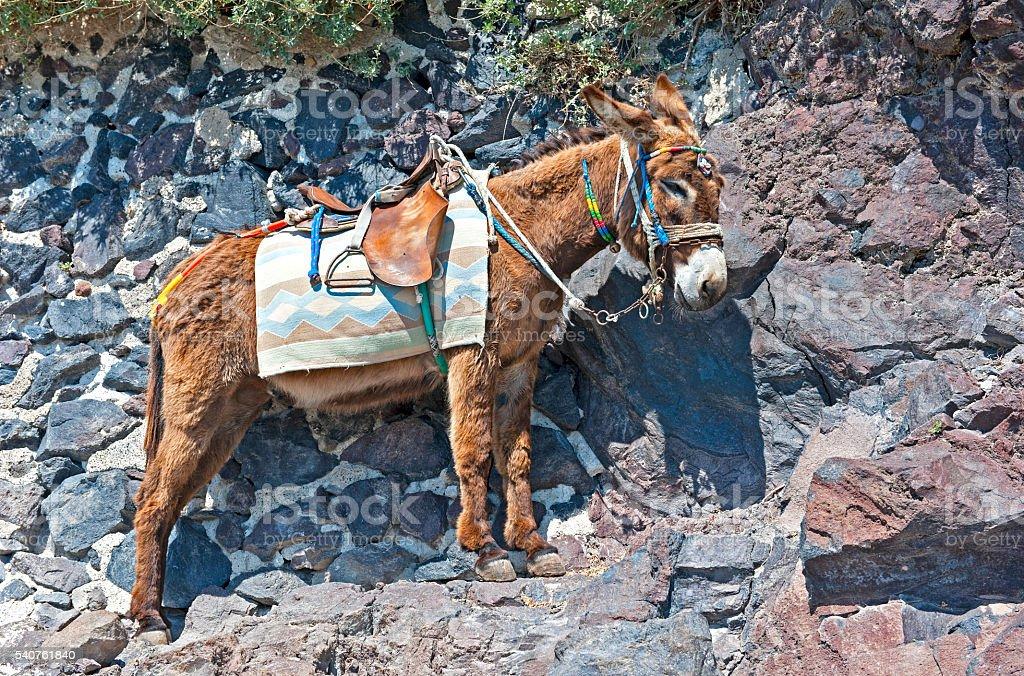 Greek donkey stock photo