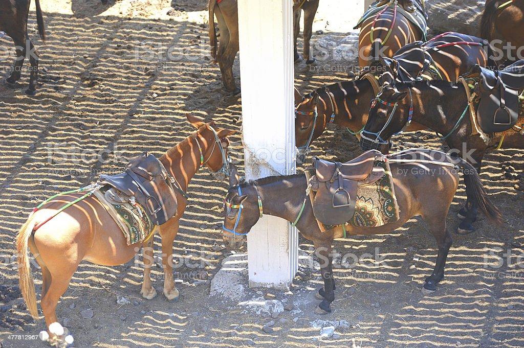 Greek donkeys at stable royalty-free stock photo