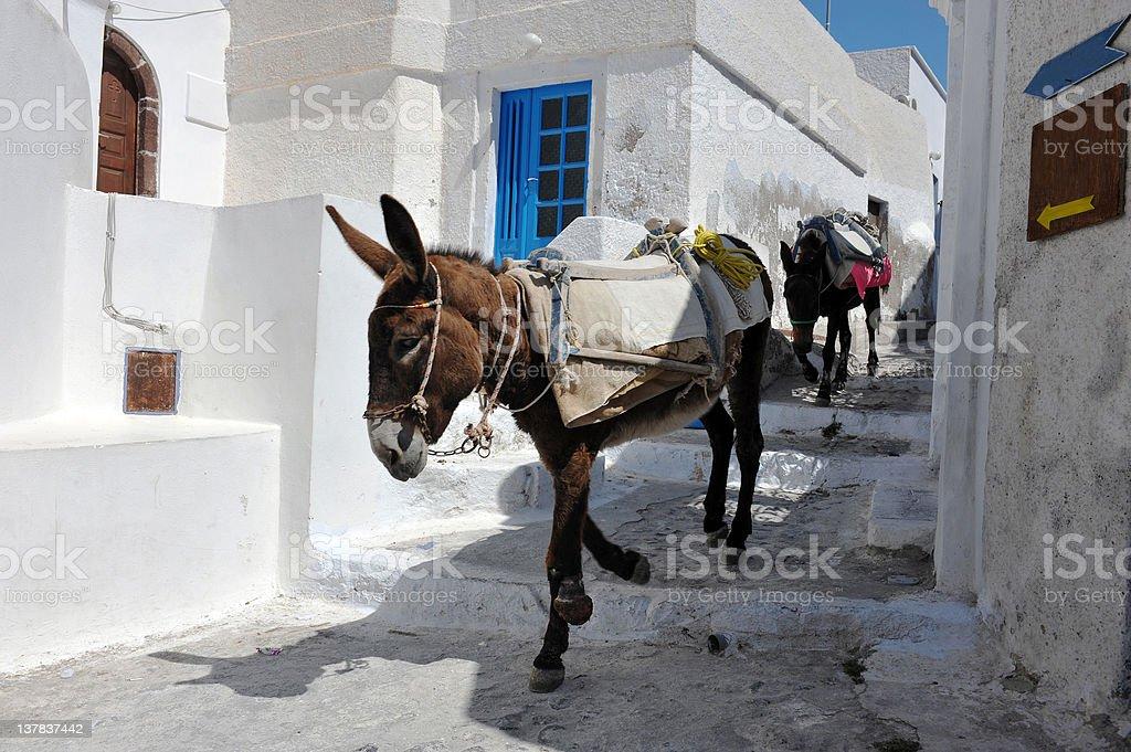 Greek Donkeys stock photo