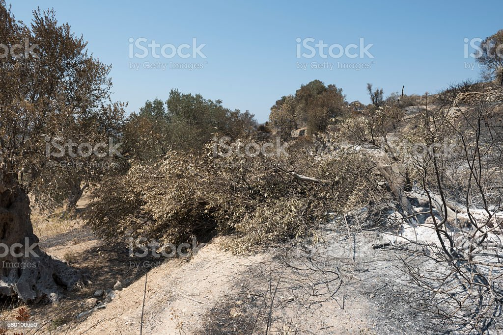 Greek Island of Chios wildfire stock photo