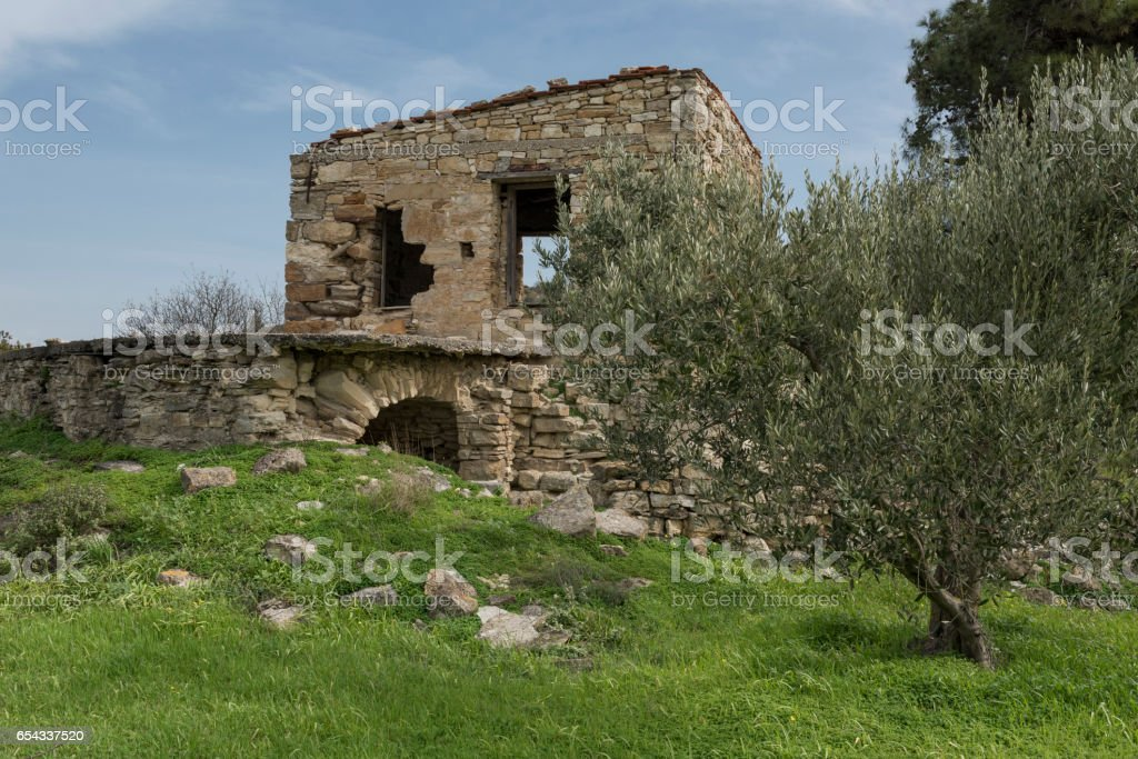 Greek Island olive grove and ruins of house in spring stock photo