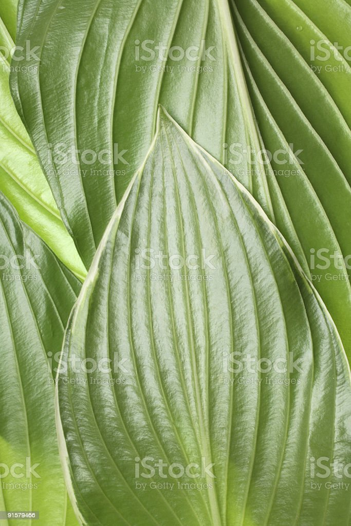 Green abstract royalty-free stock photo