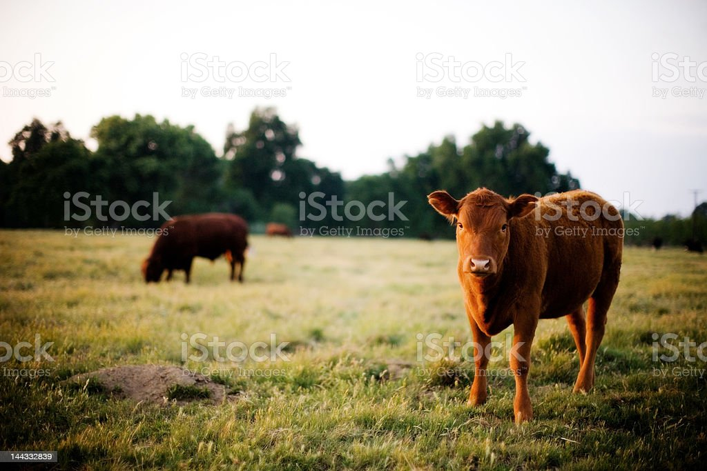 green acres royalty-free stock photo