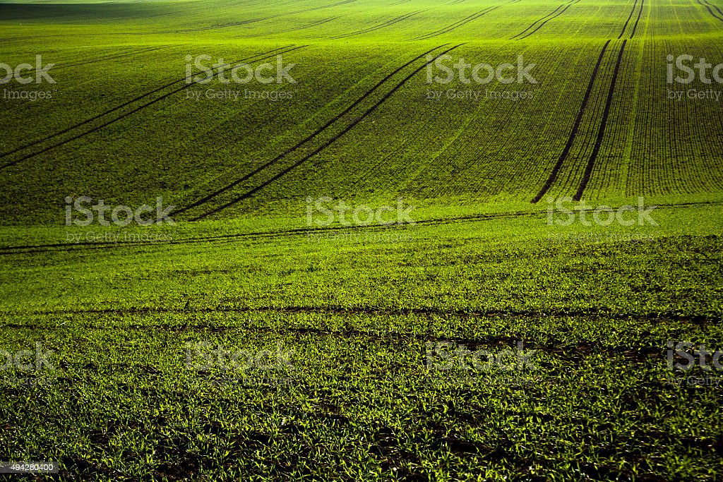 Green agricultural fields compositions. stock photo