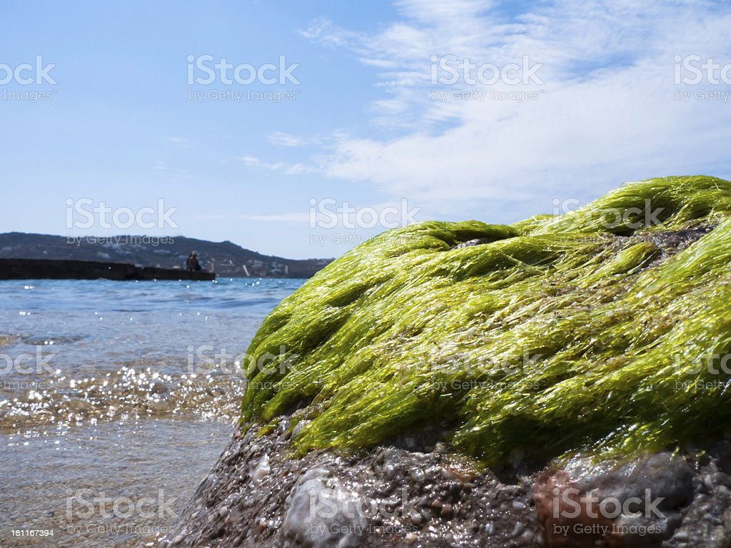 Green Algae along the  beach royalty-free stock photo