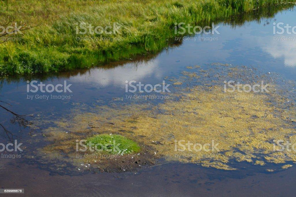 Green Algae in Water stock photo