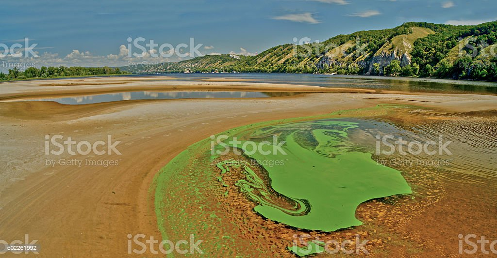 Green algae on the surface of the river. stock photo