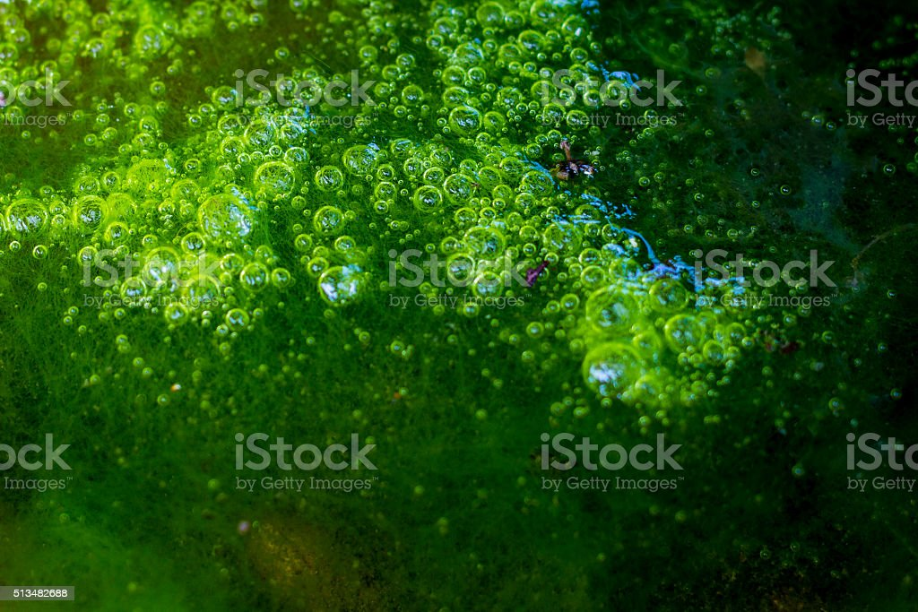 Green algae on water and Moss bubbles stock photo