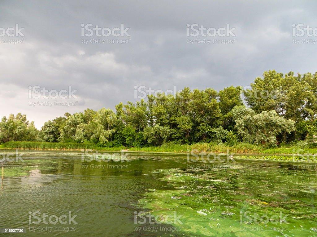 Green algae pollution on a river Dnieper stock photo