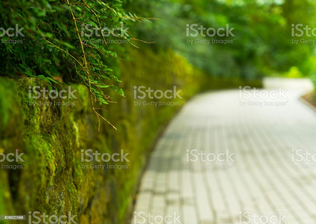 Green alley in the walking park on the island of Mainau in Germani. stock photo