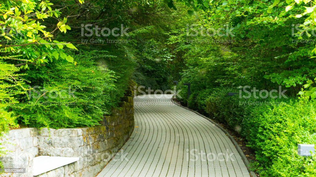 Green alley in the walking park. stock photo